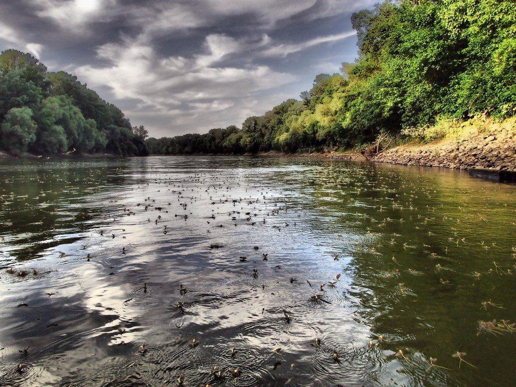 Tisza-tó, tiszavirágzás